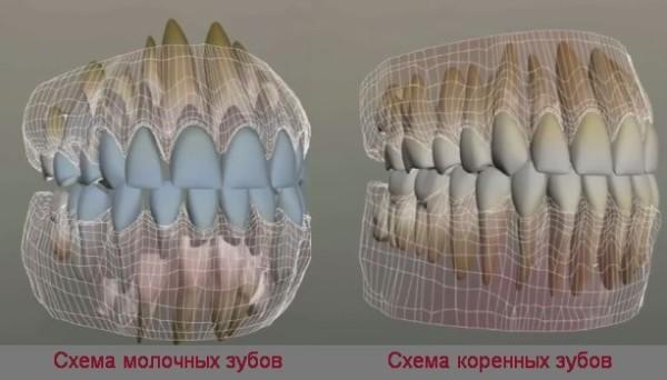 Молочные зубы у взрослых людей почему и что делать