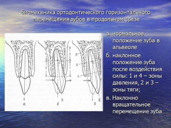 Основы биомеханики